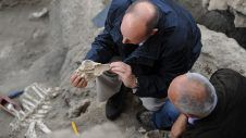 Oldest-ever proteins extracted from 3.8-million-year-old ostrich shells