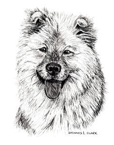 How to Draw a Long Haired Dog in Pen and Ink — Online Art Lessons