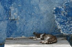 Amoundi , Santorini, Greece, cat