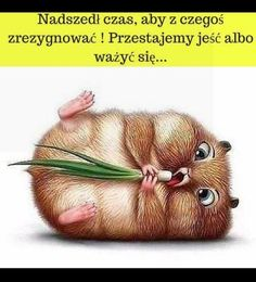 Funny Hamsters, Hamster Care, Have Some Fun, Man Humor, Animals And Pets, Funny Pictures, Kawaii, Memes, Motivation