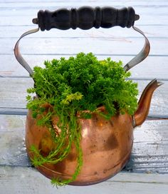 An old copper tea pot. If you use metal containers for plants, it's best to keep them out of direct sun so the roots don't overheat and cook your plants.