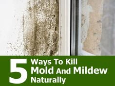 How to Get Rid of Mold and Mildew without Bleach Easy DIY Recipe