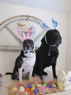 Nia and Tony all decked out for Easter in the Woodlands Room, Reynolds Mansion B&B