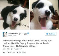 20 Hilarious Responses From 'We Rate Dogs' After People Failed to Send Dog Photos Funny Animal Memes, Funny Animal Pictures, Cute Funny Animals, Cute Baby Animals, Funny Cute, Dog Pictures, Funny Dogs, Animals And Pets, Top Funny