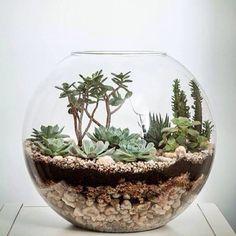DIY - Como fazer Terrários und Mini Jardins em um Vaso de Vidro Minijardim com suculentas.DIY - Fragen und Antworten zu Como fazer Terrários e Mini Jardins #