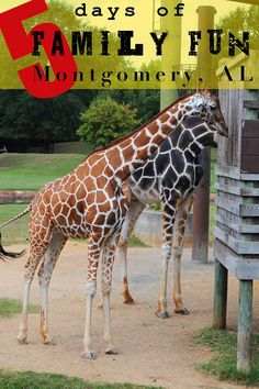 5 Days of Family Fun in Montgomery Alabama