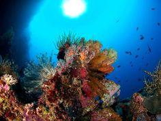 Onong Resort Siladen  beautiful reefs Celebes Divers  #diving #indonesia