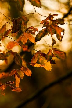 **Pretty Fall colors~❥