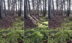A forest floor in Nova Scotia, Canada, appears to be breathing in a phenomenon captured on video by Brian Nuttall who was out walking on a windy day.