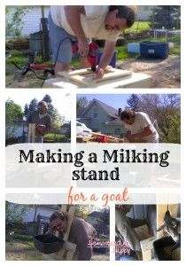 How To Build a Milking Stand for a Goat DIY Project   The Homestead Survival + Homesteading