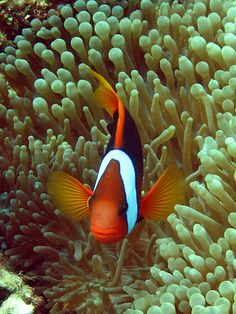 The Great Barrier Reef is the World's Best Natural Wonder