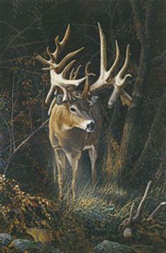 Deer Photos, Deer Pictures, Deer Pics, Deer Art, Moose Art, Deer Drawing, Big Deer, Wolf, Deer Decor