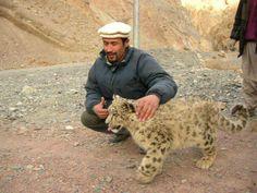 Snow leopard from GilgitBaltistan