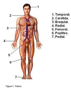 Medicine Notes, Human Body, Girly Things, Anatomy, Study, Wonder Woman, Science, Superhero, Beauty