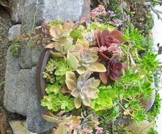 A bowl of low-growing succulents is placed on a low wall -- perfect for viewing them.