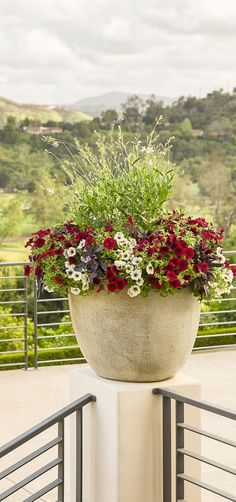 Supertunia Black Cherry is a favorite of many, and it is even better in this container creation called Enchanted Garden.