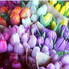 Tulipani. ..♡
