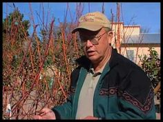 very good video on pruning several varieties of fruit trees