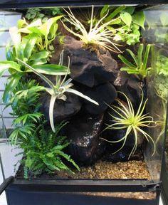 Online Aqurium Shopping: Secrets, Advice And Tips You Need Reptile Terrarium, Terrarium Plants, Snake Cages, Rock Background, Crested Gecko, Paludarium, Habitats, The Secret, Exotic