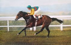 Nijinsky and Lester Piggott Limited Edition Horse Racing Print by Equestrian Artist Terence Macklin Horse Portrait, Racehorse, Horse Art, Horse Horse, Equine Art, Sports Art, Thoroughbred, Pictures Images, Horse Riding