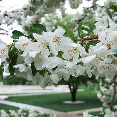 Crabapple trees are famous for their colorful, fragrant springtime blooms. Use this guide to help you select one that's right for your landscape.