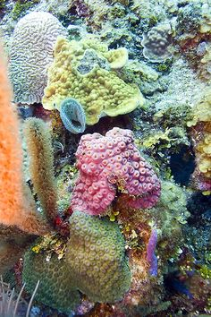 reef, Roatan, Honduras.  Photo: E=mcSCOW, via Flickr