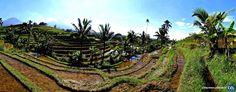 Séjour linguistique à Bali avec le CEI  #Bali #Indonesia #CEI #voyage #travel #colonie #sejourlinguistique #holiday #paradise #summer #green