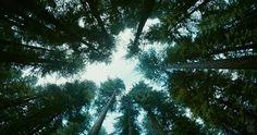 """""""Tree of Life"""" Trailer = Take That, Summer Blockbuster (DP: Emmanuel Lubezki)"""