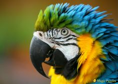 Bird Cage: afbeeldingen, stockfoto's en vectoren Bird Pictures, Pretty Birds, Tanzania, Costa Rica, Habitats, Things To Come, Animals, Parrots, Rice