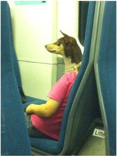Optische Täuschung... :D #hund #dogsplaces