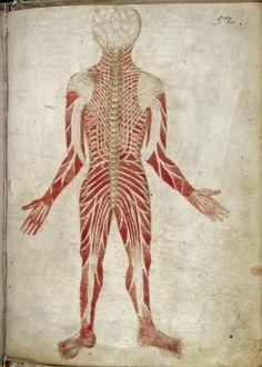 Scientific Illustration | inspirationsandruminations: 15th Century...