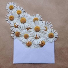 Bem Legaus!: Flores de envelope