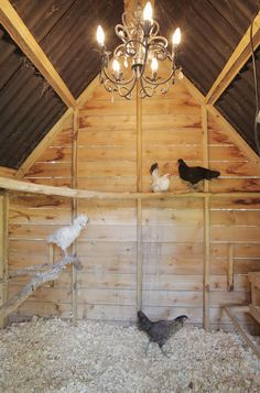 Fancy schmancy with the chandelier in the chicken coop