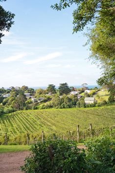 Where to go in New Zealand? Waiheke Island for wine tasting!   12 beautiful places on New Zealand's North and South Island that you cannot miss! Including Queenstown, Wanaka, Waiheke Island, Mount Cook Village, and more. #WineTasting