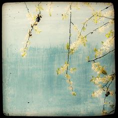 Printemps sur fond bleu  8x8 Fine Art by MarcLoretPhotography, $25.00