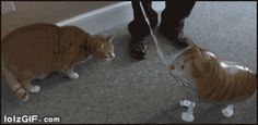 Cat attack toy cat | Funny Cat GIFs