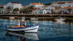 Best Things To Do in the ALGARVE. Looking for day trips in the Algarve? Check out my selection of the best things to do in the Algarve off the beach. Discover the history, art, culture, architecture, food, wine and natural beauty of this region of Portugal.