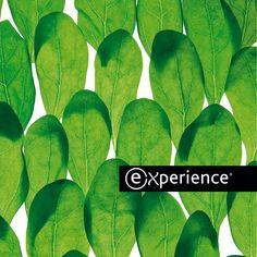 EXPERIENCE- tecnologie per estetica e benessere