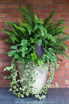 Ivy, ferns and other tropical plants in a tall white stone pot against a red brick wall. Ivy, ferns and other tropical plants in a tall white stone pot against a red brick wall. Container Flowers, Flower Planters, Container Plants, Container Gardening, Flower Pots, Succulent Containers, Diy Flower, Outdoor Planters, Garden Planters