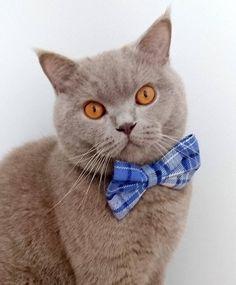 Cat Bow Tie Collar Plaid Flannel, Dog Bow Tie Collar, Pet Bow Tie Collar Blue and Cream, Pet Neckwear