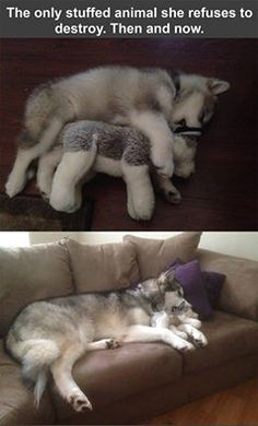 Sleeping with a stuffed dog