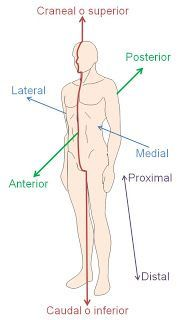 Planes in anatomy Human Body Anatomy, Human Anatomy And Physiology, Muscle Anatomy, Examen Clinique, Medicine Notes, Nursing School Notes, Medical Coding, Medical Icon, Medical Anatomy