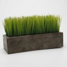 Rectangular Potted Wheat Grass By Tag via Amazon