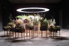 Taiyo Onorato & Nico Krebs - Grow Homes, Installation View,  64 Houses on Stilts with local wild plants inside Wood, Inkjet Prints, Soil, Plants, rotating Grow-Lamp System