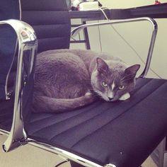 ray william johnsons cat :)