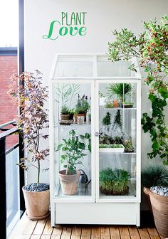 Indoor greenhouse - perfect for delicate  plants - ( Inspired By Plants by decor8, via Flickr )