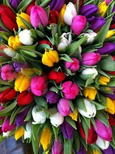 Mix colourful of Tulips