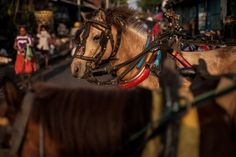A Dokar horse waits in the Badung market, October 14, 2012, Denpasar, Bali, Indonesia. The Dokar (horse and cart) is traditional local transport used in Denpasar. (Chris McGrath/Getty Images)#