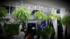 Fotoblog užívateľky milenass | Modrastrecha.sk Plants, Plant, Planets