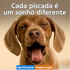 Coisa fofa!   #Hao123Fofurinhas #Animais #Hao123